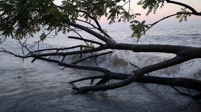 Tree down at lake